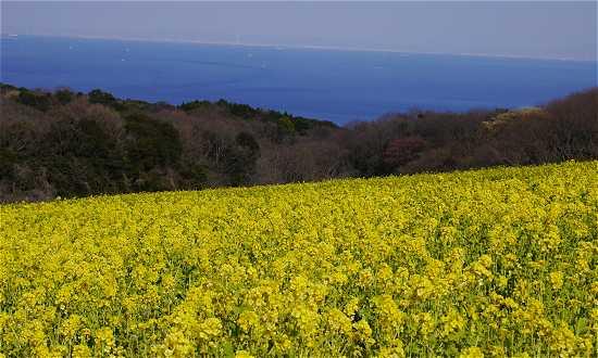 淡路島を楽しむのイメージ