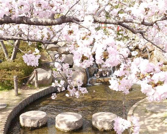 神戸桜おすすめのイメージ
