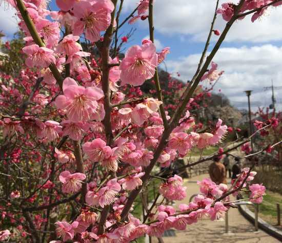 岡本梅林公園のイメージ